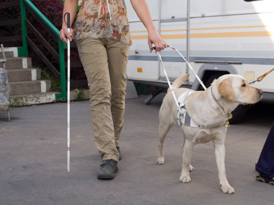 A blind woman walks with a cane beside a guide dog